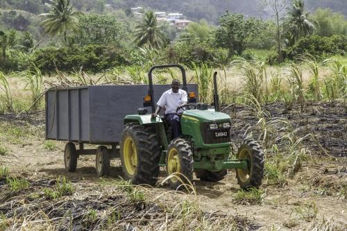 2_sugarcane_field.jpg