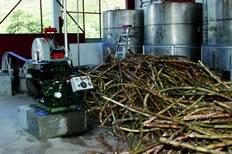 st-lucia-distillers-web45.jpg